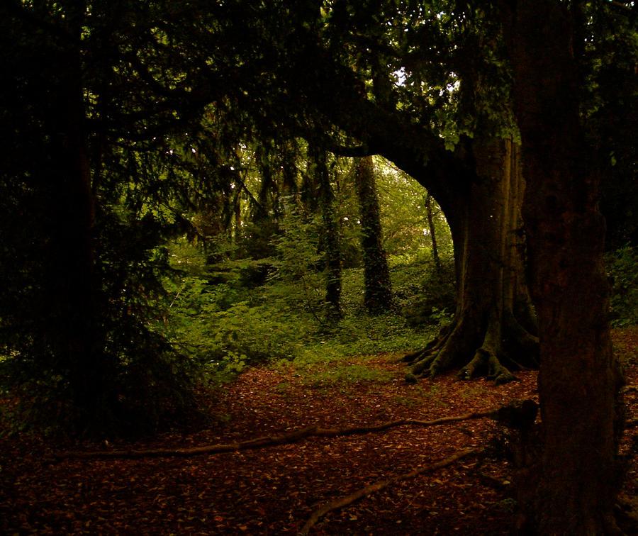 Irish Summer Woods by RosaLui