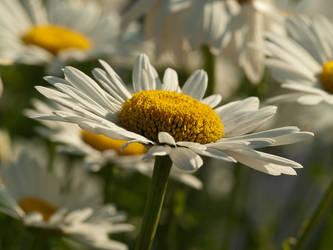 Flowering by sandor99