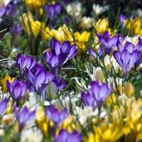 Springtime Now by sandor99