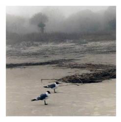 misty day by poeangel