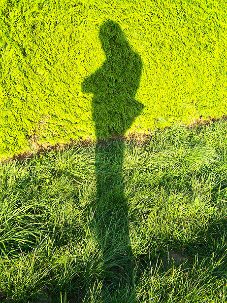 Green shadow by kine80
