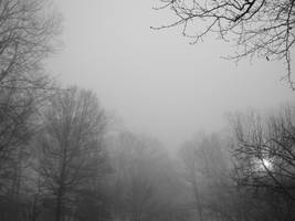 Foggy Forest 2 by bean-stock
