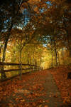 Colorful Forest 7