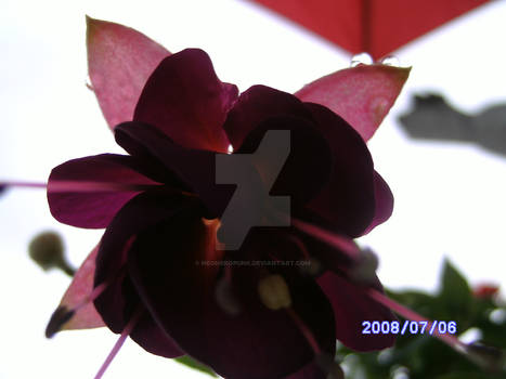 Flowers of Uchtelhausen16