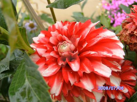 Flowers of Uchtelhausen27