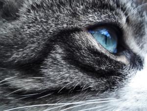 Azkopie's Profile Picture
