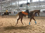 Paint Horse Stock 1