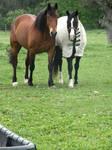 Bay Horse Stock