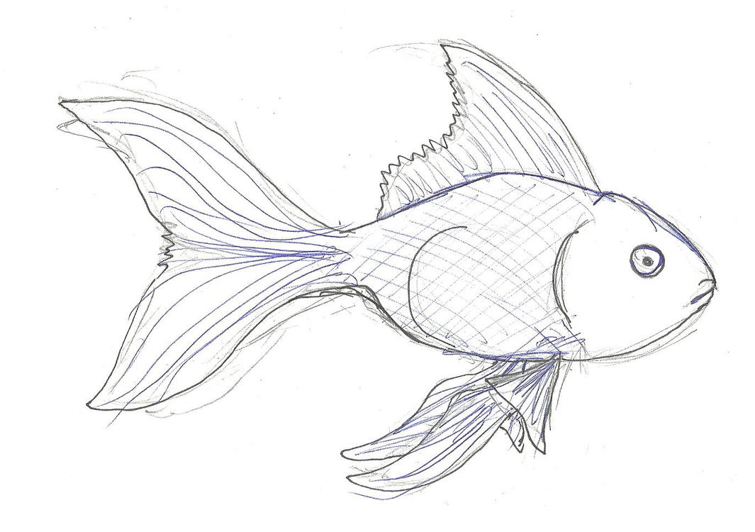 Goldfish Sketch Ballpoint 427875173 on Memory Of A Gold Fish