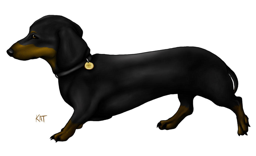 Max the Dachshund by fanchielover15