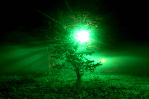 Light Tree by McMuschkl