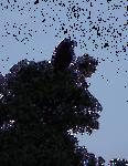 bird on tree cutout by wonderlandstockX