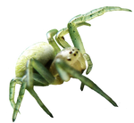 free cutout spider png on transparent background by wonderlandstockX