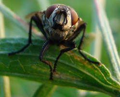 free insect 2 stock by wonderlandstockX (5) by wonderlandstockX