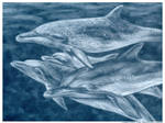 spotted dolphins -pastel