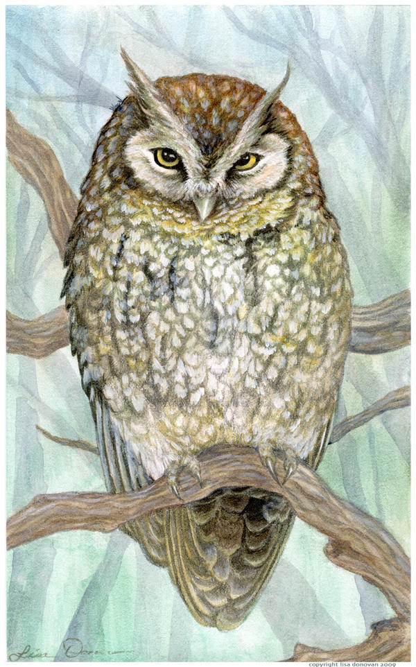 Screech Owl in ink + acrylic by LisaCrowBurke