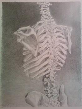 skeletal pencil drawing