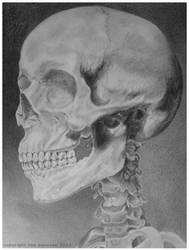 skull pencil drawing by LisaCrowBurke