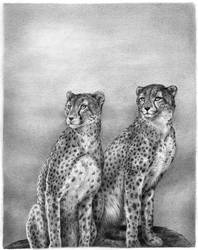 African Cheetahs - pencil by LisaCrowBurke