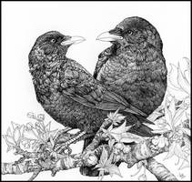 Lovecrows in ink by LisaCrowBurke