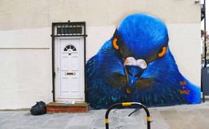 Broadway Market Pigeon by WhoAm-Irony