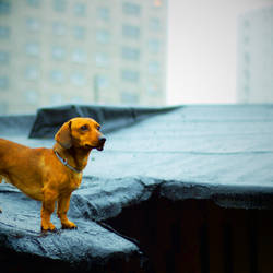 Explorer of the Roofs by drkshp