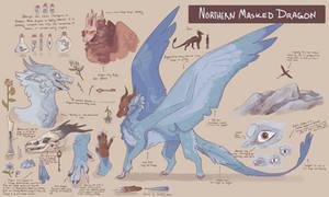 Northern Masked Dragons | Concept sheet