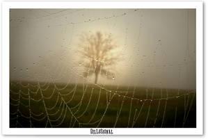 Dillusional by cavez