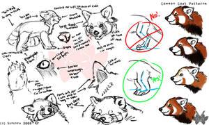 Red Panda Study by synchra