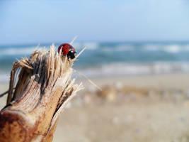 ladybug by m1n1maL