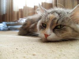 mY cat again by m1n1maL