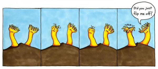 Zoanthid Humor