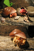 More Origami Hermit Crabs by DonyaQuick