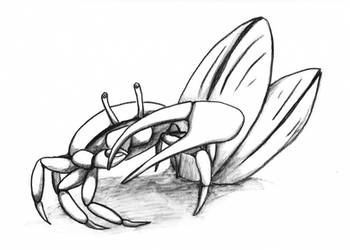 Fiddler Crab by DonyaQuick