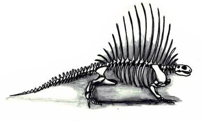 Edaphosaurus Skeleton