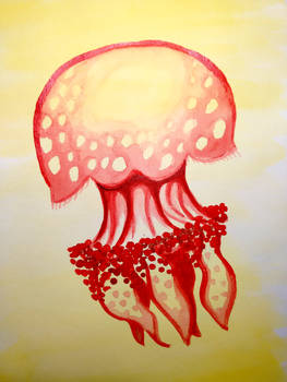 Red Lagoon Jelly