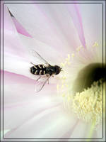 cactus flower III by XSini