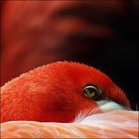 flamingo by XSini