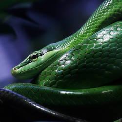 green snake by XSini