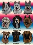 My favourite dogbreeds by NaokoHara