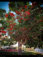 Joshua Tree (2019-05-09)