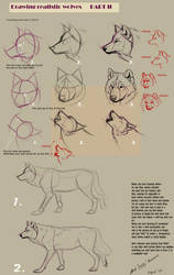 Drawing realistic wolves II