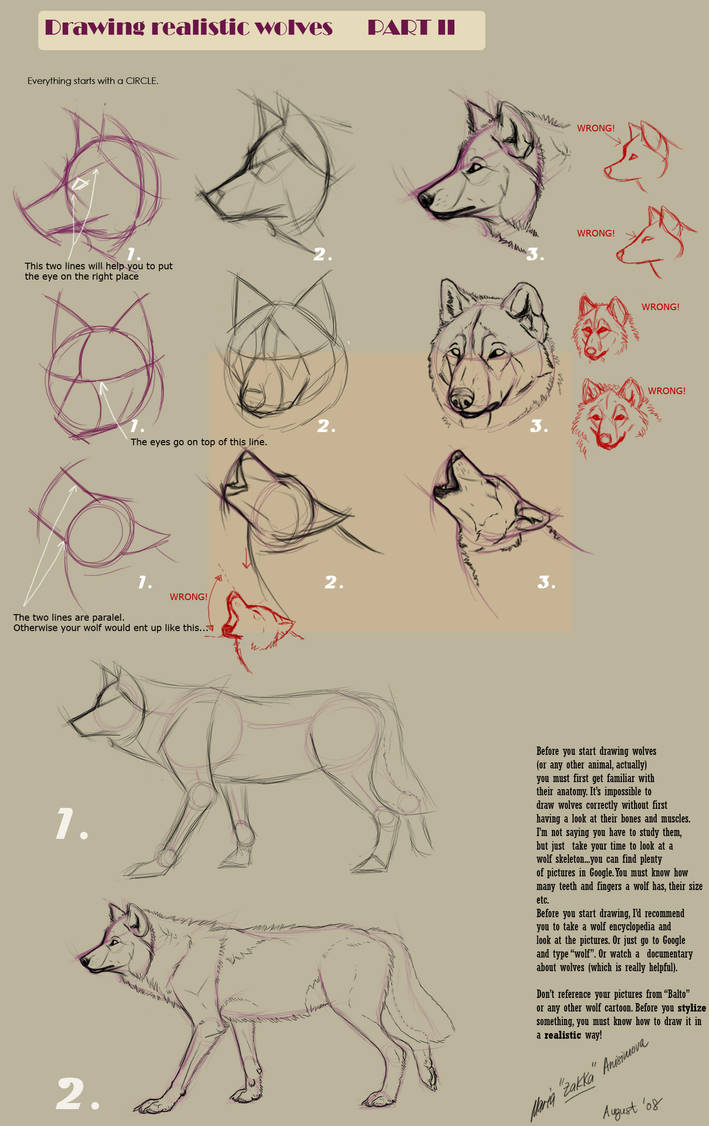 Drawing Realistic Wolves Ii By Yellow Eyes On Deviantart