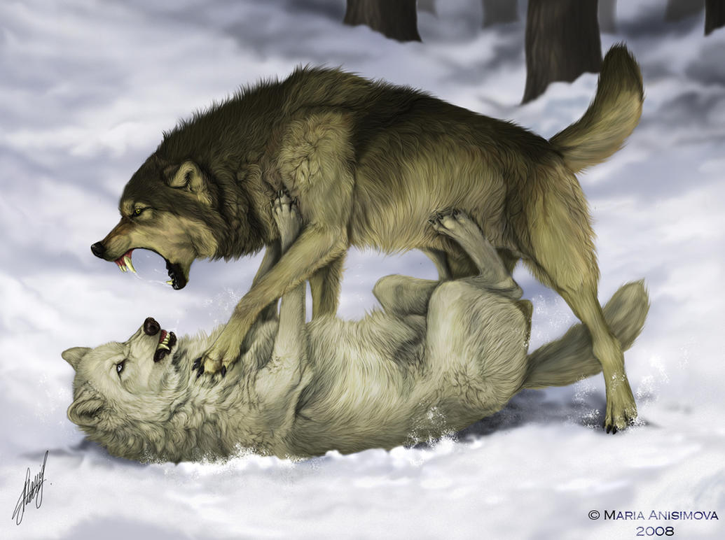 Fight by Yellow-eyes
