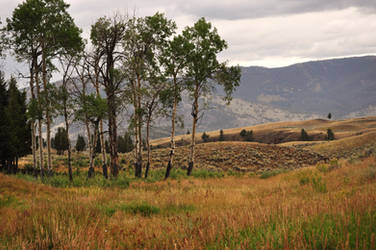 Yellowstone 1 by ConvertedCanvas