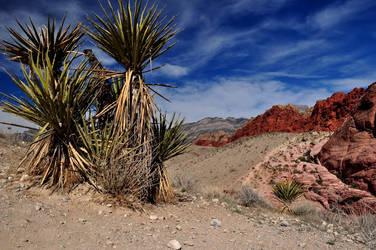 The Desert by ConvertedCanvas