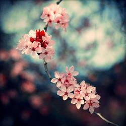 Square Petals by FDLphoto
