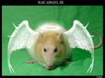 Rat Angel III