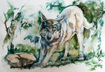 Wolf, watercolor