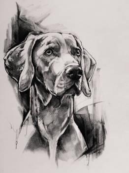 Dog, pencil